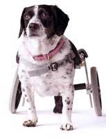 dog-cart-handicapped