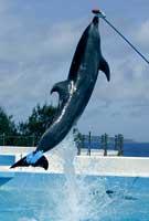 prosthetic dolphin tail, carbon fiber prosthetic